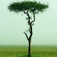 kablosuz internetin ağaçlara zarar verdiğini açıklandı