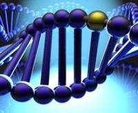 Yeni bir gen tanımlandı