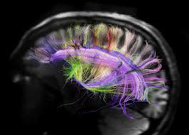 insan beyninin sırları çözülüyor