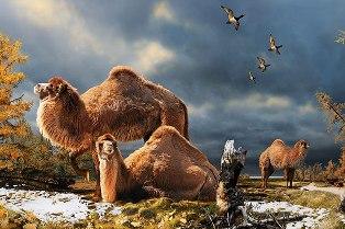 Kutuplarda deve fosili