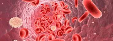 Lösemiye hücre tedavisi umudu