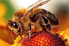 Arılar erozyondan koruyor