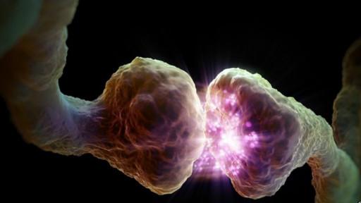 beyin-hucresi