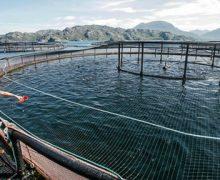 Karbondioksitten balık yemi projesi