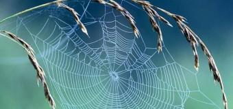 Çelik zırhtan kuvvetli: Örümcek ağı