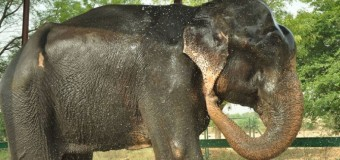 50 yıl sonra kurtarılan fil ağladı