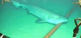 Google'ı köpek balığı korkusu sardı
