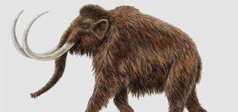 Mamut klonlama için büyük umut