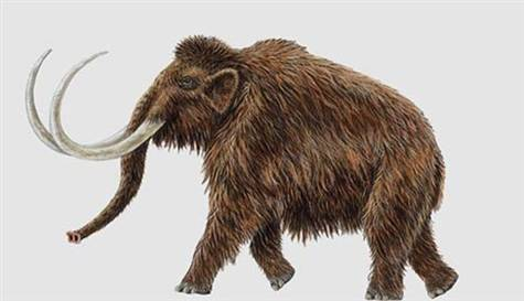 mamut-fosil