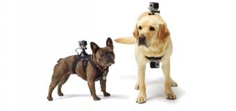 Köpeklere kamera aksesuarı