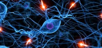 Bilim insanları beynin gizemini çözebilecek mi?
