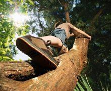 Ağaca tırmanmak hafızayı güçlendiriyor
