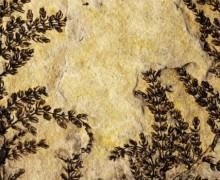 Dünya'daki 'ilk çiçek' bulundu