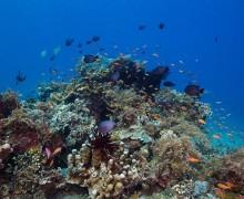 Okyanuslardaki gıda zinciri hızla azalıyor!