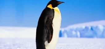 Antarktika'da 150 bin penguen öldü