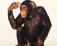 Bilimadamlarının araştırmasına göre, şempanzeler de aynı eğilimi gösteriyor.