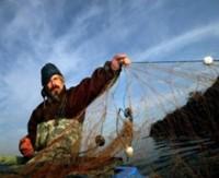 Dünya denizlerindeki büyük balık türlerinin yüzde 90'ı, toplamının ise yüzde 60'ı tükenmiş durumda.