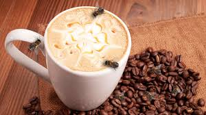 Kafein arıların hafızasını güçlendiriyor