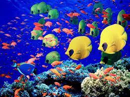 kizildeniz dünyadaki en uygun dalış yerlerinden birisi