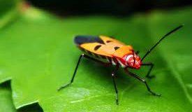 Böcekler yollarını nasıl buluyor?