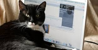 Dell bilgisayarları 'kedi çişi' kokuyor