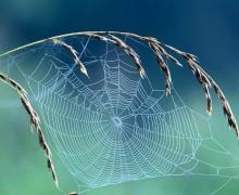 Yılan ve örümcek korkusunun kökeni 'Evrim'