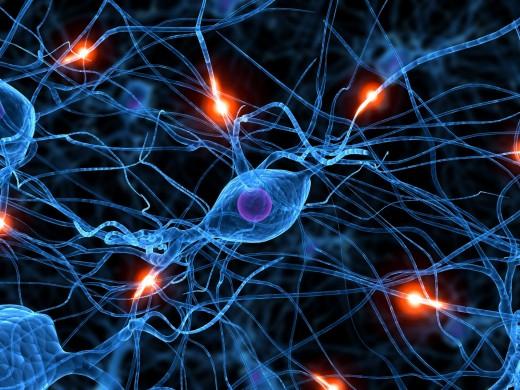 insan-beyninin-sirlari