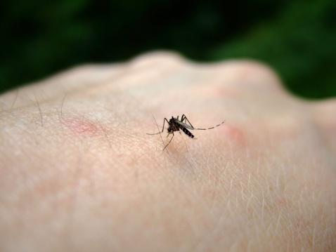 Sivrisinekler avını 50 metreden seçiyor