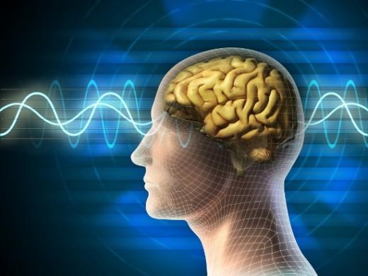 insan-beyni