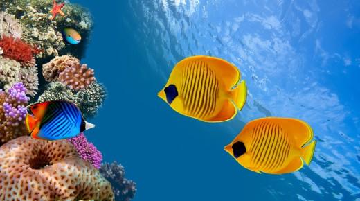 okyanus-baliklari