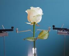 Dünyanın ilk elektronik bitkisi üretildi